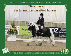 Gypsey cob Domino 'Double Dynamo' Affiliated Dressage